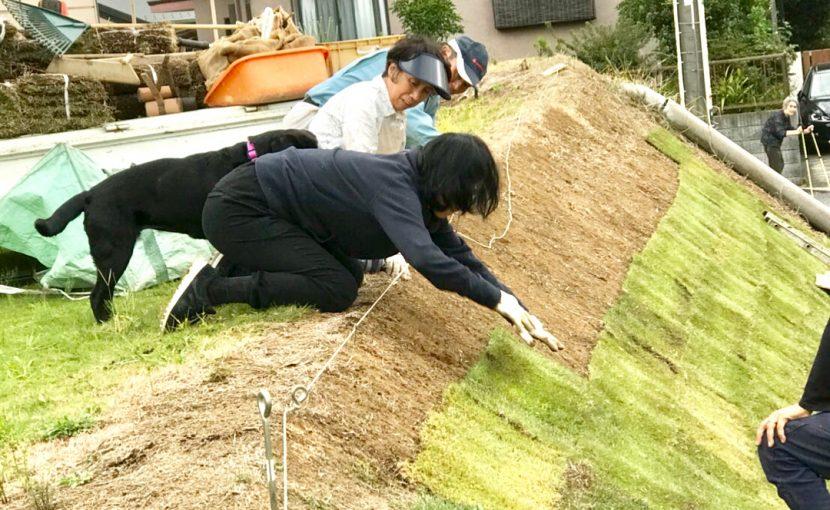 家族の芝生植え(2017.10.09)