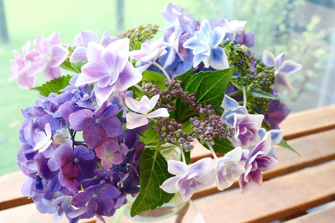 庭から集めた紫陽花たち(2020.06.13)